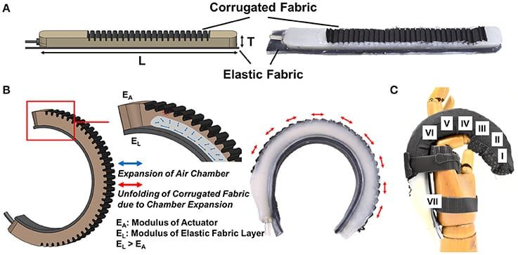 Figure 1. (A) A fabric-reinforced soft actuators with a corrugated fabric layer and an elastic fabric later [Actuator thickness, T = 12 mm, and length, L = 160 mm (Thumb), 170 mm (Little Finger), 180 mm (Index & Ring Fingers), 185 mm (Middle Finger)]. (B) Upon air pressurization, the corrugated fabric layer unfolds and expands due to the inflation of the embedded pneumatic chamber. Radial budging is constrained when the corrugated fabric layer unfolds fully. The elastic fabric elongates during air pressurization and stores elastic energy. The actuator achieves bending and extending motions at the same time. (C) A bending motion is preferred at the finger joints (II, IV, VI). An extending motion is preferred over the bending motion at the finger segments (I, III, V) and the opisthenar (VII).
